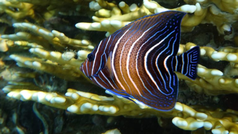 New Angelfish from Discovery Cove