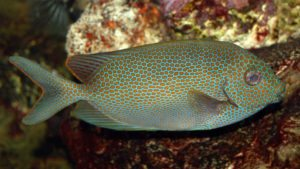 SeaWorld, Discovery Cove update