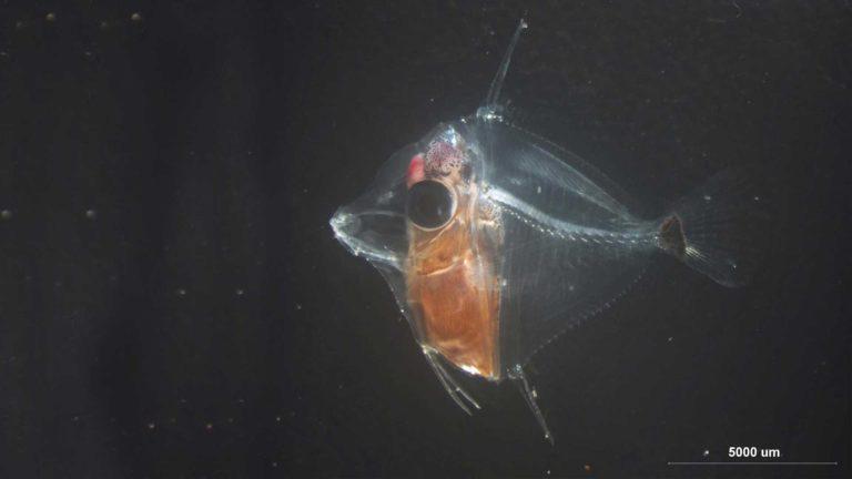 What is it? Molecular identification of larvae